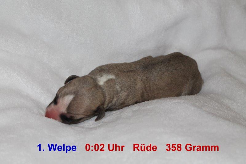 1. Welpe (1)