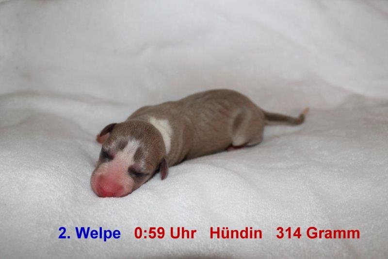2. Welpe (1)