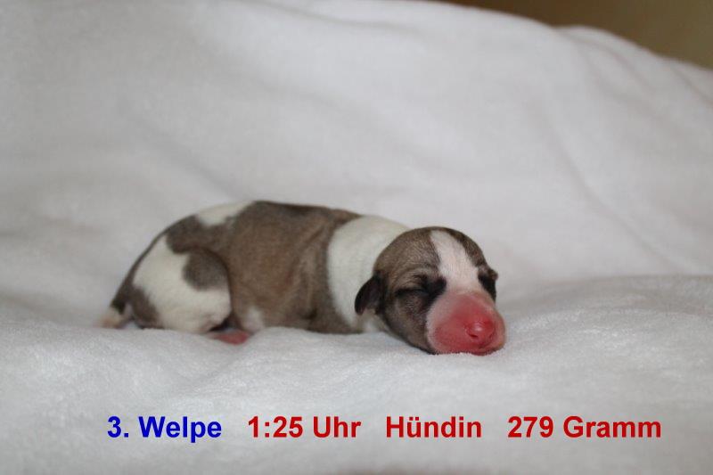 3. Welpe (1)