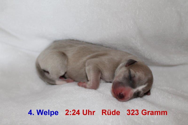 4. Welpe (1)