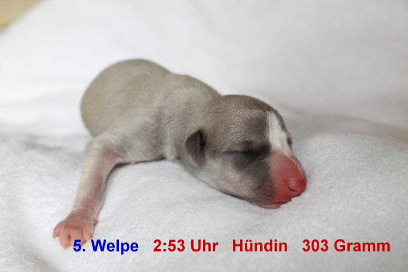 5. Welpe (1)