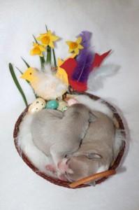Ostern (1)